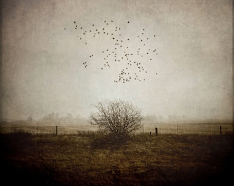 flying birds tree fine art surreal photo, bedroom home decor, landscape nature photography neutral beige gold sepia Ontario large wall art