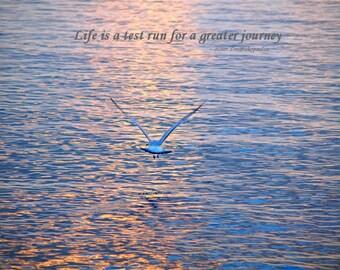 Life Is A Test Run poster, Jonathan Livingston Seagull inspired, wall art, home decor, gift 20, fine art photograph, friendship