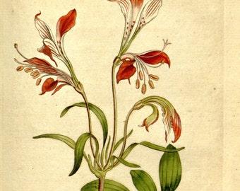 Flower print art, Nature decor, Antique print, Flower art, Vintage print, Vintage poster, 125