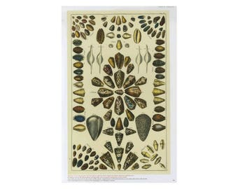 Sea Shell Print Book Plate SALE Buy 3, get 1 free