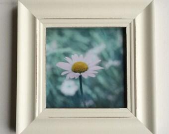 Framed print, daisy photo, flower photo, shabby decor, green, mint, teal, aqua