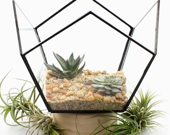 Geometric Decor Basket Terrarium Abstract Watertight  - Air Plant Holder, Air Plant Terrariums, Terrarium Kit, Succulent Terrarium