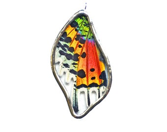 Real Butterfly Wing Jewelry. Real Butterfly Wing Pendant. Sunset Moth Necklace. Rainbow Necklace. Preserved Butterfly Jewelry. Real Moth.