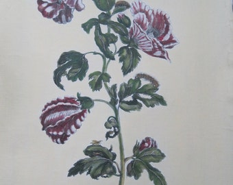 Botanical by Maria Sibylla Merian Hand Colored in Italy on Canvas Ktemia Brasiliensis