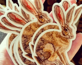 Jack Rabbit Vinyl Sticker
