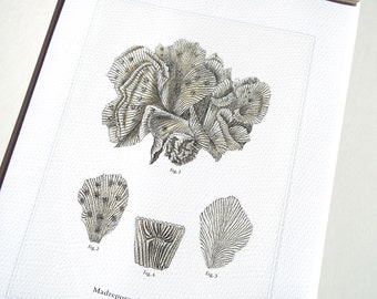 Neutral Sea Coral Print 5 Naturalist Collection on Watercolor Paper