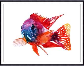 Red Cichlid Fish Art Print,ORIGINAL Watercolor Fish Painting,Home decor
