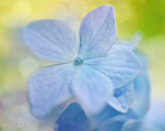Spring Flower Photography - Hydrangea 1 - 8x12 fine art print - blue yellow green pastel floral cottage chic home decor