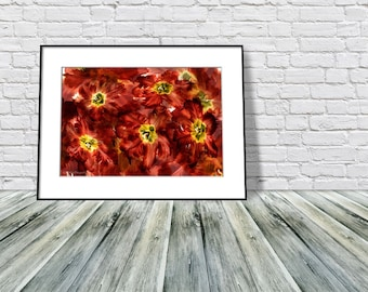 Floral Wall Art, Colorful Home Decor Wall Art, Flower Photography, Deep Red Living Room Art, Bedroom Art, Gift For Home