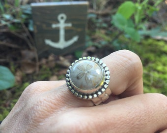 Fossilized sand dollar ring by Barnacle Love