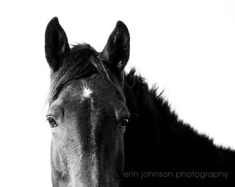 black and white rustic horse wall art, animal photography, horse photograph, horse gift, farmhouse large living room decor