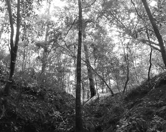 Digital 8x10 Print of Trees - Black and White - Photograph Instant Download