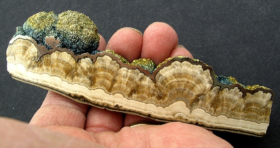 2 side Polished baryte and Marcasite, Lubin Mine, Poland. 5 inches long
