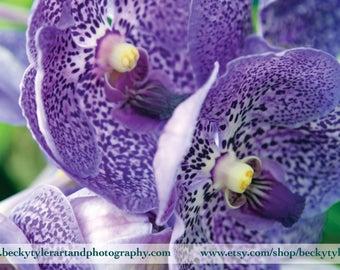 Vanda Orchid Macro Fine Art Photo Print