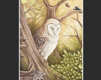 Afternoon Barn Owl Print (Matted)