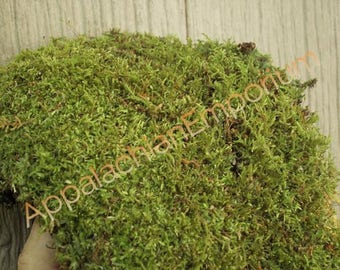 Live Feather & Sheet Moss for Terrariums, Vivariums, Bonsai, Reptile 1 Quart Bag