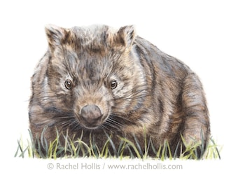 Original Wildlife Art - Wombat - Australian Wildlife - Drawing - Woodland