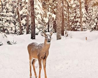 Deer Photo, Deer Photography, Deer Lover, Deer Photo Card, Deer Picture, Picture of Deer, Wild Deer Art, Wild Nature Photo, Wild Deer Art