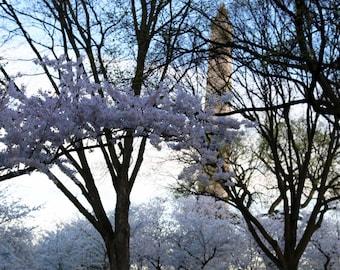 Flower Photo, Soft Focus, Cherry Blossom Photograph, Washington DC, Dreamy, Washington Monument, Fine Art Photography- DC Cherry Blossoms