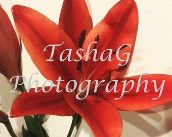 Red Amaryllis Flower Photography Canvas