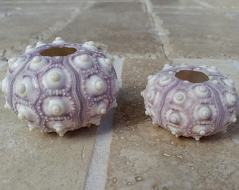 Sputnik Sea Urchins -  2 urchins #165 Ask for Int'l ship rates