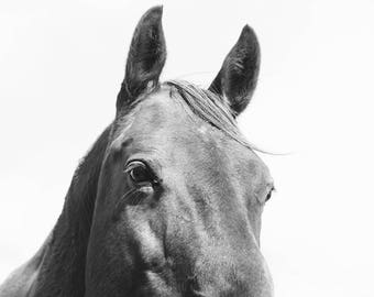 Monochromatic Horse Home Decor, Black and White Equestrian Photograph, Physical Print