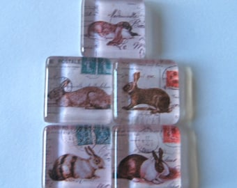 Cute Bunny Square Glass Magnets Set of 5