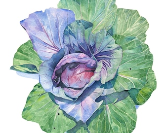Cabbage print, Cabbage watercolour, cabbage painting, vegetable watercolour, A4 size, C15616, Farm to Table wall art print, kitchen decor