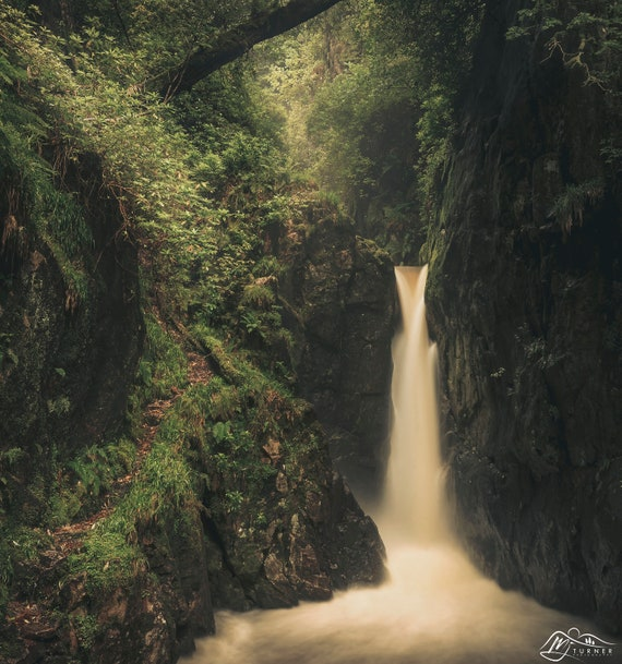 Stanley Force [Photographic Print]
