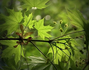 leaves summer green nature photography fine art photography home decor