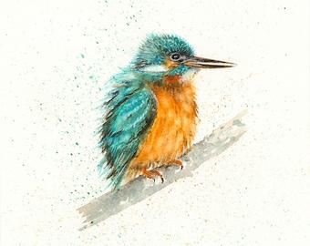 Kingfisher - Sketch I - Giclée Print