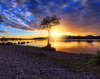 A burst of Light: The Lone Tree, Loch Lomond