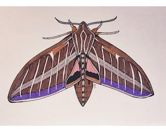 Purple Accent Moth Print