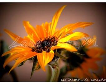 Photo background large 30X40cm on sunflower flower
