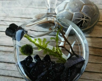 Marimo and Java Moss Terrarium Locket - Live Plant Jewelry - Galaxy Stone