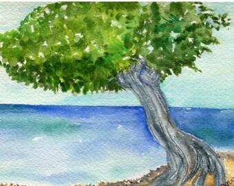Divi Divi Tree, Aruba  watercolor painting original, ocean art, seascape watercolor, 4 x 6, SharonFosterArt