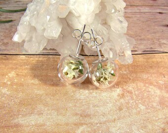 White flower stud earrings, glass globe studs, real flower earrings, dried flower jewelry, terrarium earrings