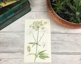 Ground Elder vintage print botanical art vintage bookplate goutweed laundry room decor yoga studio nature prints floral painting etsy uk