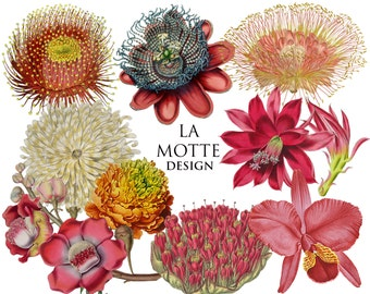 flower clipart exotic flowers clipart of beautiful color wild flowers digital 10 png's digital flower