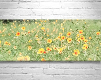 Wildflower Nature Photography, Panoramic Wall Art, Yellow Poppy Flowers, Gold Poppies, Wild Poppies Art Print, Poppy Picture, Poppy Art