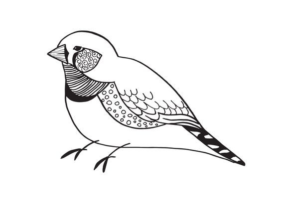 Whimsical finch illustration pretty finch bird line drawing