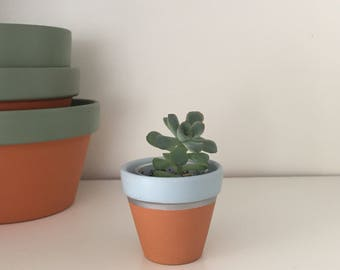 Mini terracotta plant pot - ideal for succulents and cacti (light blue)