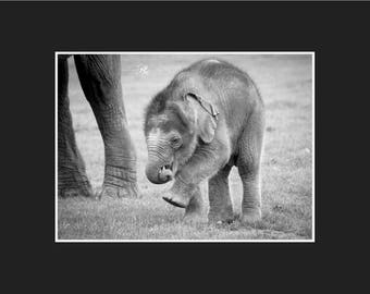 Elephant Mounted Print, Black and White Elephant Photograph, Elephant Wall Art, Nursery Decor, Baby Elephant print, Elephant photo, Elephant
