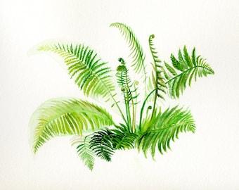 Fern painting, botanical original illustration, fern watercolor
