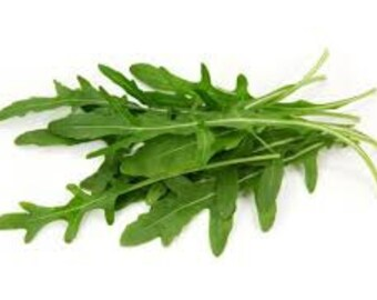 ARUGULA LETTUCE SEEDS  50 Fresh seeds ready to plant in your garden