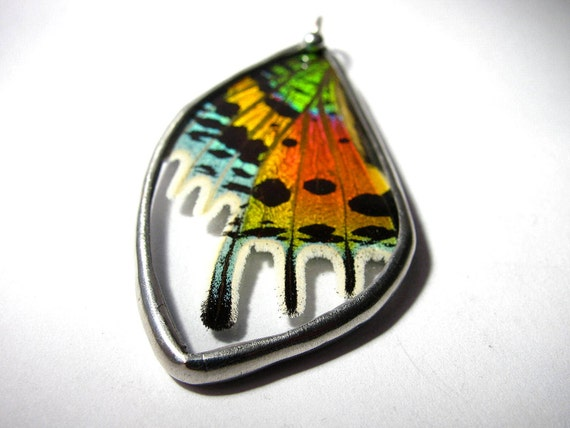 Butterfly Wing Jewelry / Real Sunset Moth / Wing Pendant