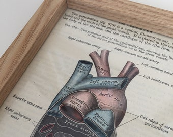 Antique Anatomical Human Heart Vintage Lithograph, print from 1942 Gray's Anatomy, framed art