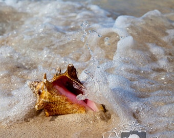 Seashell in the Surf - Fine Art Photography
