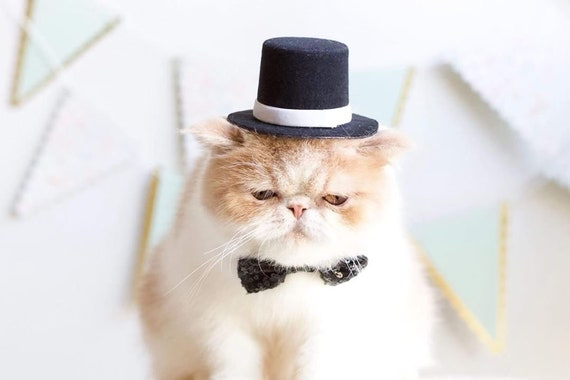 Top Hat and Bow Tie || Dog Gift || Pet Birthday Party Outfit || Pet Puppy Cat Kitten || Kitty Pig Birthday Crown |