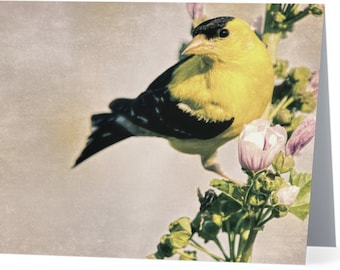 Goldfinch photograph - single blank note card, bird photo, Gifts for her, Gifts for mom, Gifts for bird lovers, Gifts for nature lovers
